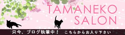 ブログ「タマネコサロン」